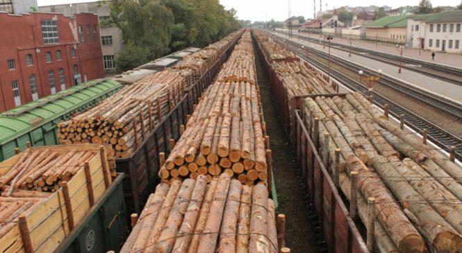 У МЕРТ і ДФС по-різному оцінюють масштаби вивезеної деревини з України