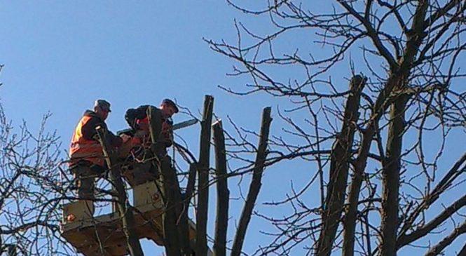 Київрада заборонила молодильне обрізання дерев у столиці