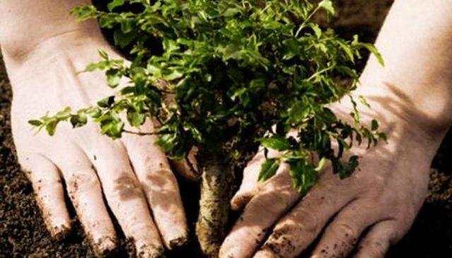 У Дніпрі відкрили справу через фіктивне озеленення, що коштувало бюджету 8 мільйонів