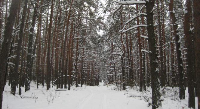 Кабмін віддав 10 гектарів лісу приватній фірмі з рахунками у банку, який перебуває в стані ліквідації