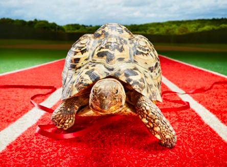 Із швидкістю черепахи