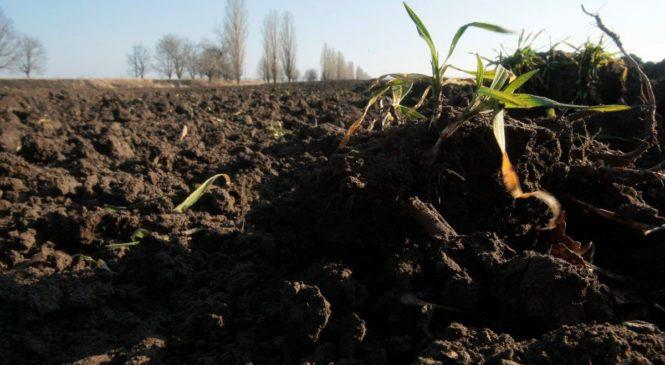 На Тернопільщині сільська голова не задекларувала ділянку, яку отримала від своєї ж ради