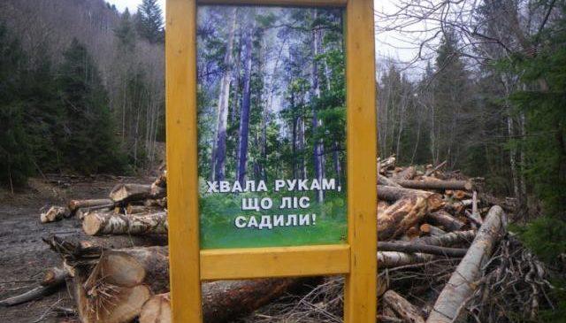 На Харківщині сільського голову підозрюють у знищенні дубів