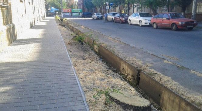 Озеленення по-бердянськи: дерева зникають безвісти