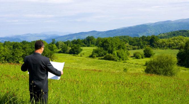 Фірмі, яка зі скандалом отримала земельну ділянку, віддали ще 8 га лісів на Одещині
