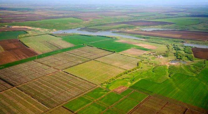 На Київщині голову однієї із сільрад підозрюють у незаконній роздачі землі